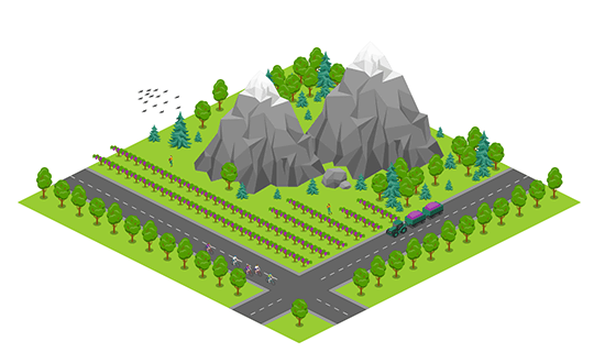 Area - Vineyard