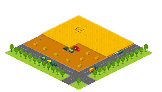 Area - Autumn Field