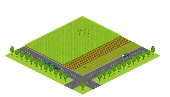Area - Spring Field