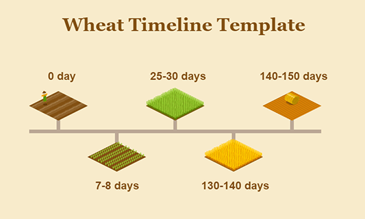 Wheat Timeline Template